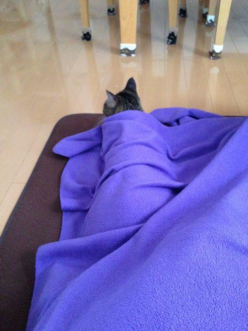 アリソン毛布