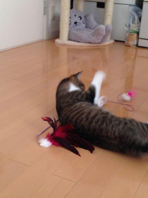 アリソン遊ぶ