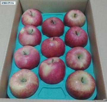 サンデー りんご02 201508