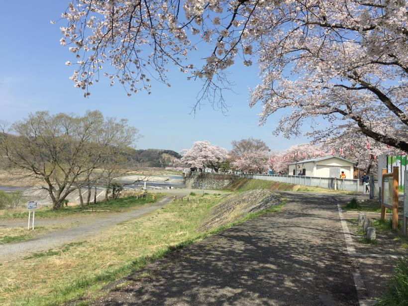 tamagawasakura17.jpg