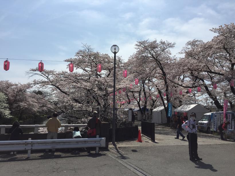 tamagawasakura18.jpg