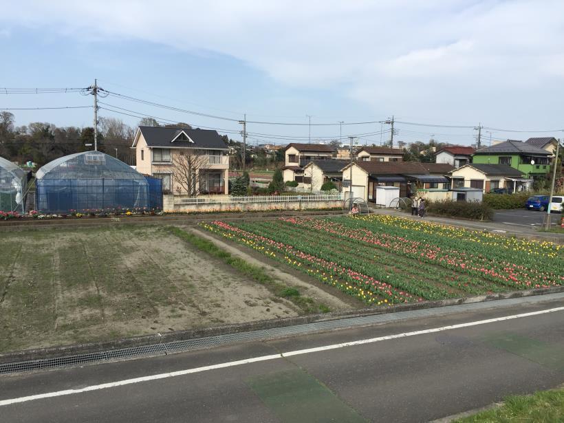 tamagawasakura31.jpg