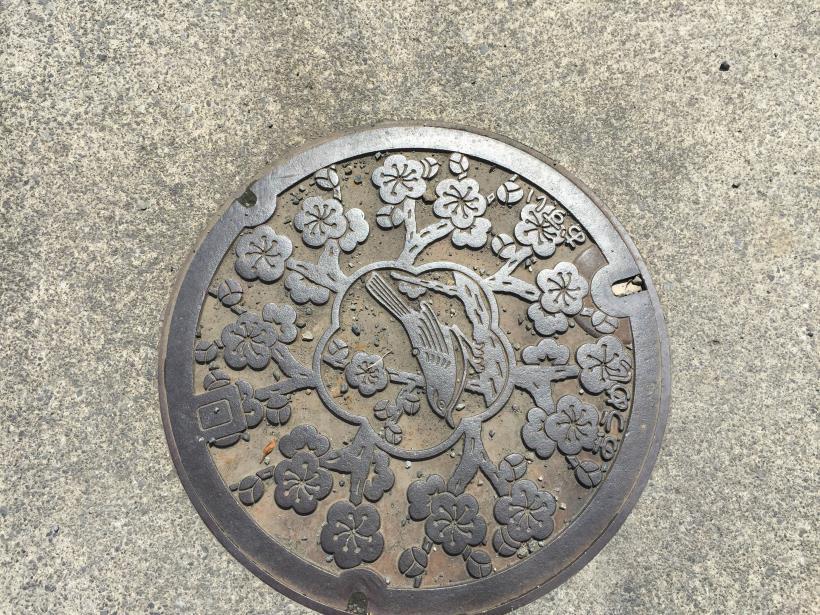 tamagawasakura37.jpg