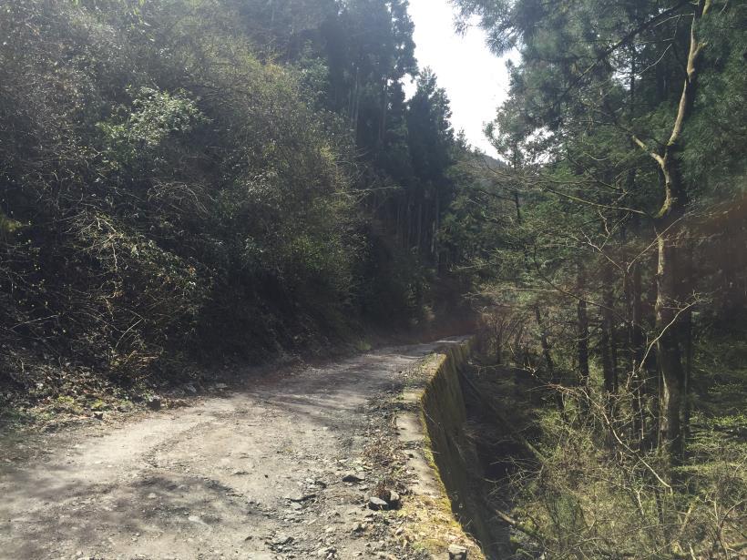 umezawasunnniwa17.jpg