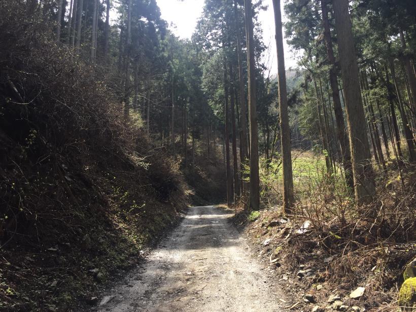 umezawasunnniwa21.jpg