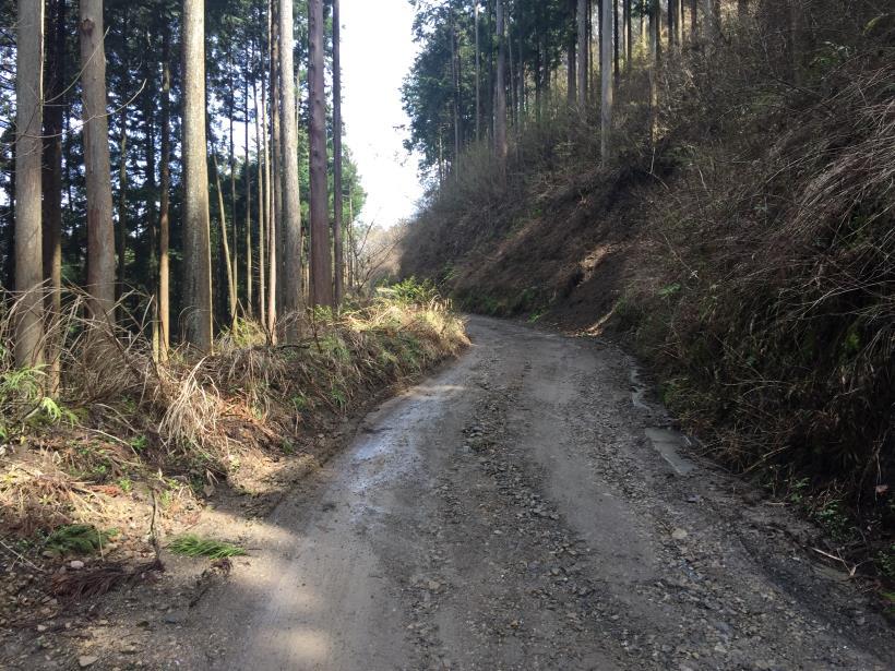 umezawasunnniwa34.jpg