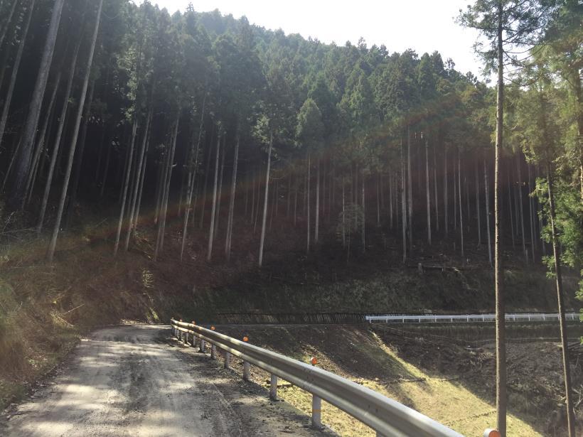 umezawasunnniwa74.jpg