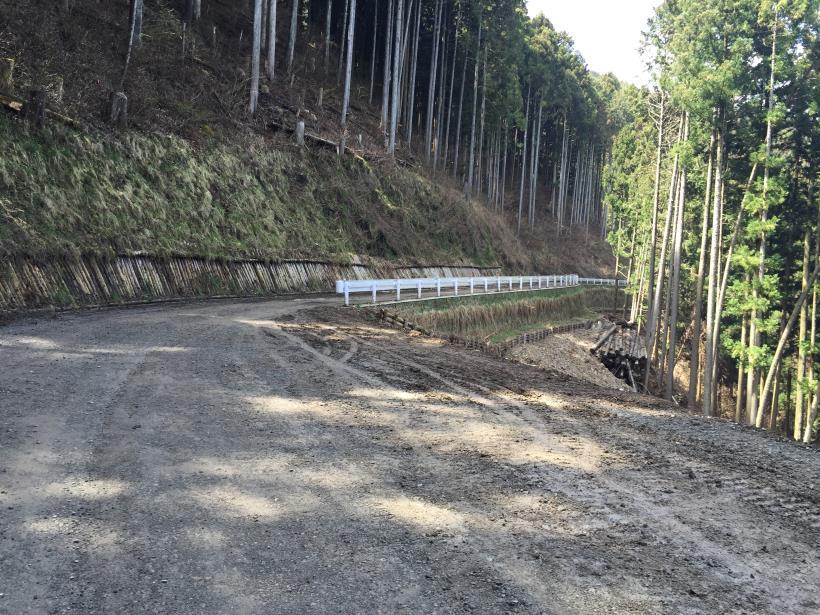 umezawasunnniwa75.jpg