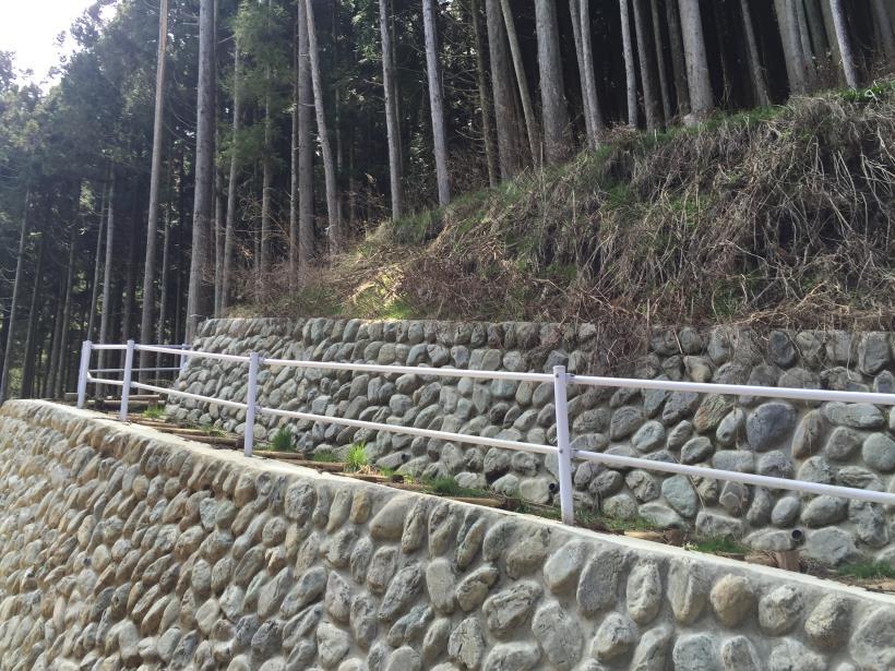 umezawasunnniwa81.jpg