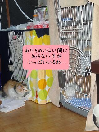 ミモ&仔猫