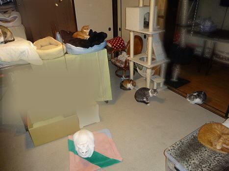 今日の猫部屋
