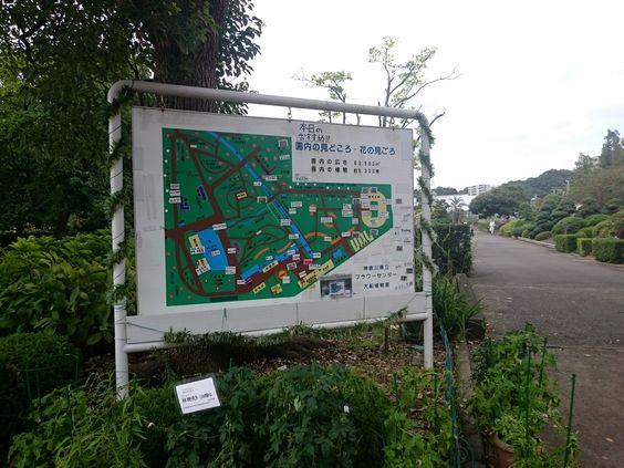 furawa-sennta-DSC_0571.jpg