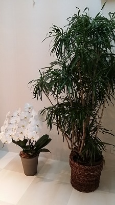 リボディ 植木