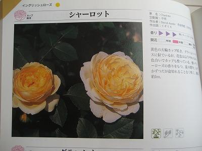 s-IMG_8738.jpg