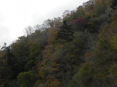 赤沢山登山口付近の雑木