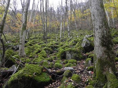 苔地帯の秋