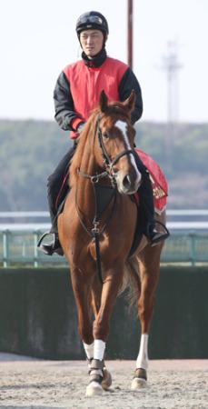【桜花賞】現三歳最強牝馬メジャーエンブレムの死角を探してみる