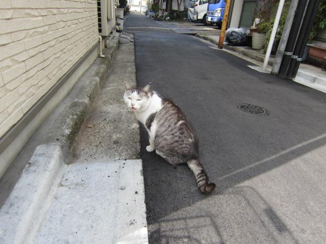 錦糸町のネコ