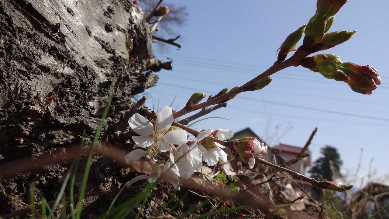 PICT_20160403_094750-s.jpg