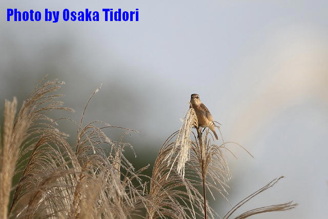 IMG_5381-1.jpg