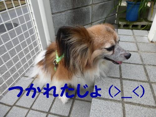 P1040385(1).jpg