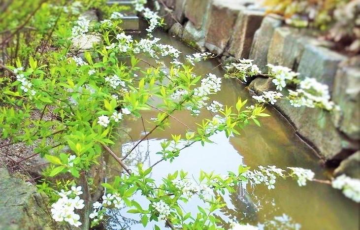 P1000004yukiyanagi.jpg