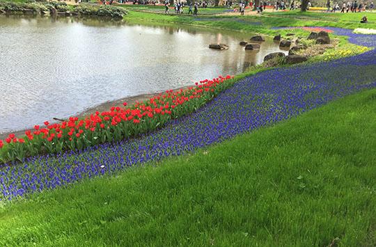 160409_tulip.jpg