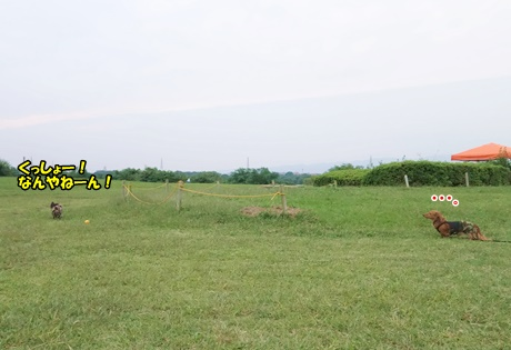 DSC02607.jpg