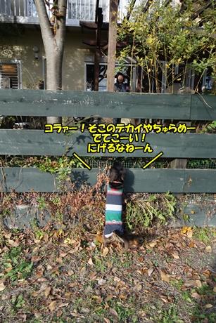 DSC04218_20151114194747ce8.jpg