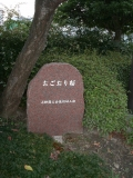 JR新山口駅 おごおり桜 石碑
