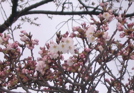 H280404 開花