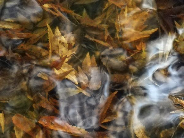 池に沈んだ紅葉