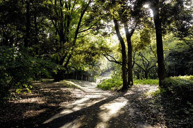 木漏れ日の下を散歩するのは心地よい。