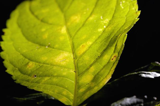 Nikon D2X 35mm f/2D 暗い日陰でこの葉にだけ光があたっていた