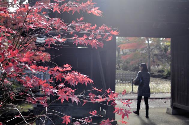 Nikon D2X 35mm f/2D 豪徳寺