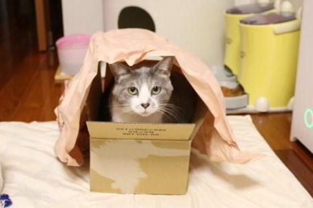 箱があったので入りました!