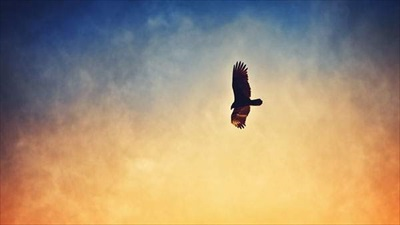 rewallpaper-eagles-photo-09.jpg