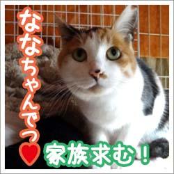 banner_nanakokuti.jpg