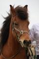 木曽馬 2