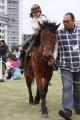 木曽馬 4