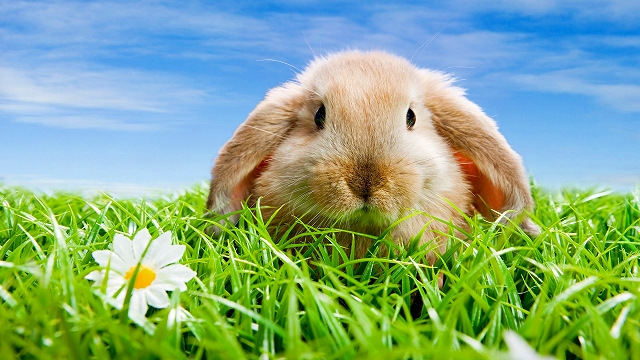 Cute-rabbit_1920x1080[1]