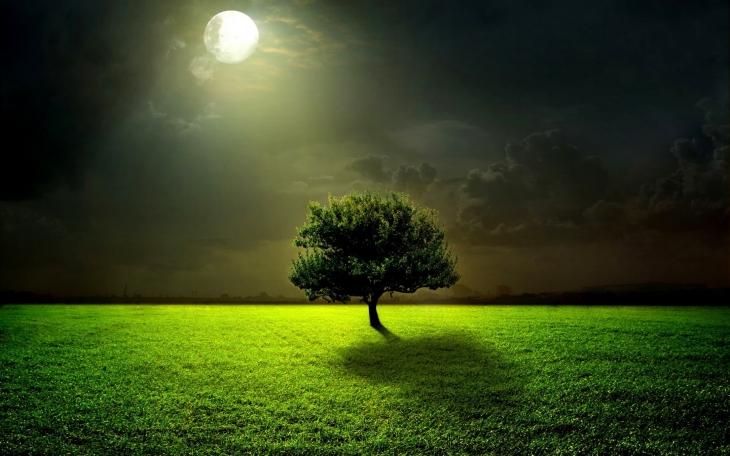 green_life_nature_grass_tree_harmony_hd-wallpaper-1669460.jpg