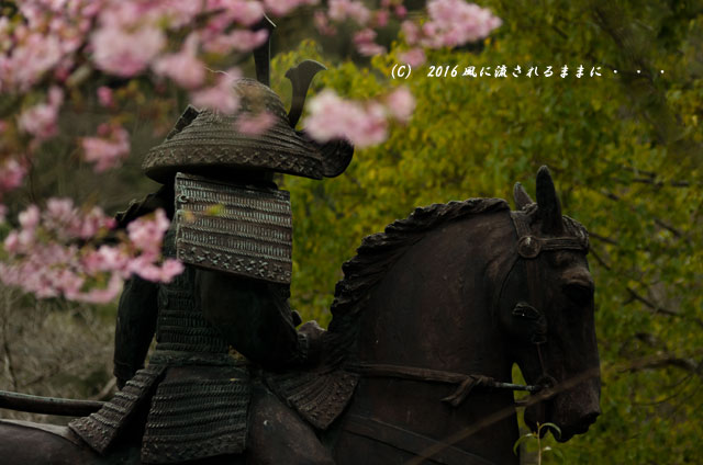 2016年3月6日撮影 大阪・観心寺の梅10