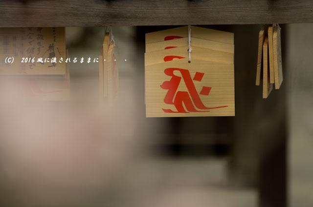 2016年3月6日撮影 大阪・観心寺の梅4