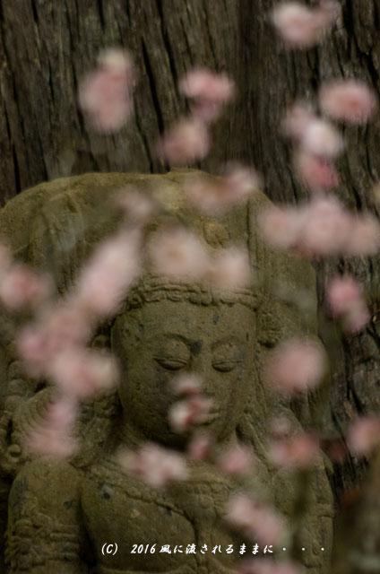 2016年3月6日撮影 大阪・観心寺の梅8