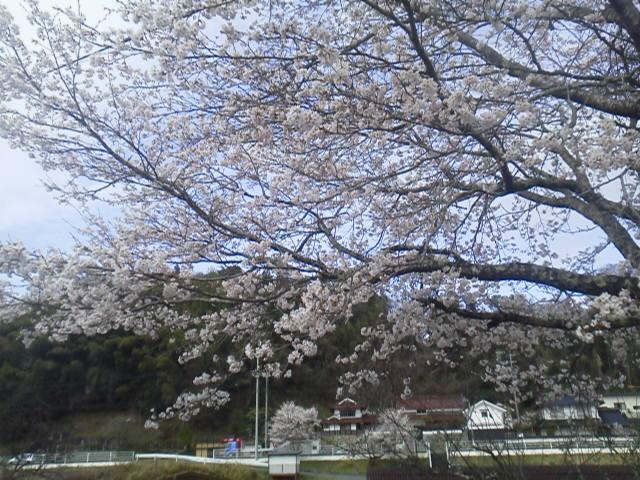 28404urasaku.jpg