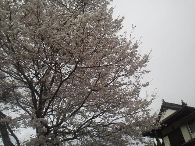 28404urasaku2.jpg