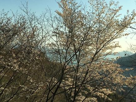 3262016大空山桜S7