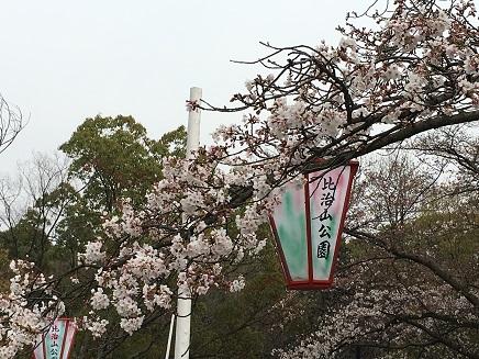3292016比治山の桜S1
