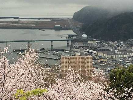 4042016大空山の桜S4